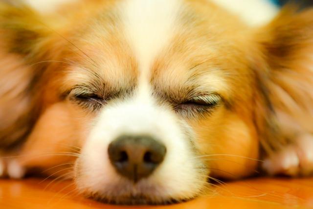 ペットが亡くなったら飼い主がするべきこと。安置や火葬について紹介