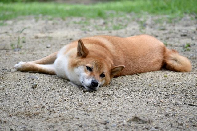 老犬介護の現実…介護の必要性と今後のために知っておくべきこと