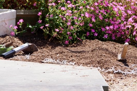 ペットの埋葬方法|庭にペットを埋葬する際の注意点や法律について