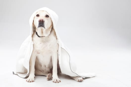 大型犬の火葬方法と費用相場