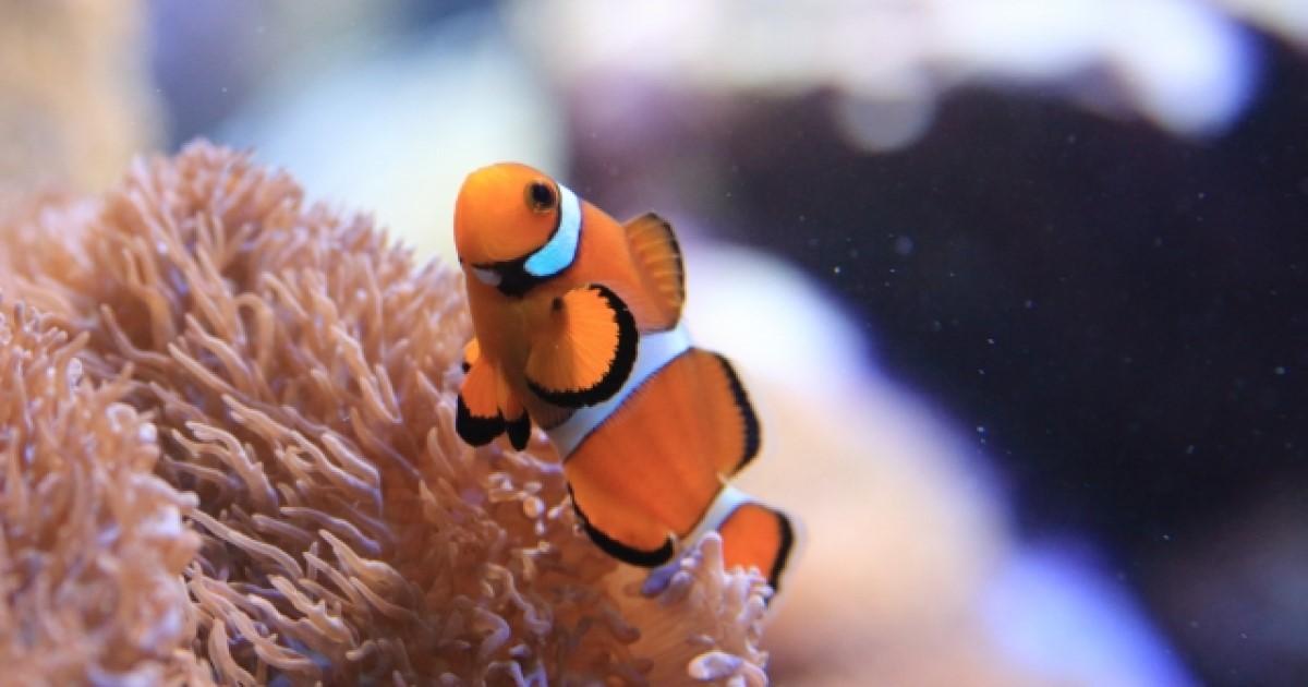熱帯魚が死んだら