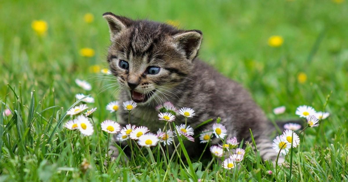 猫 ペット葬儀